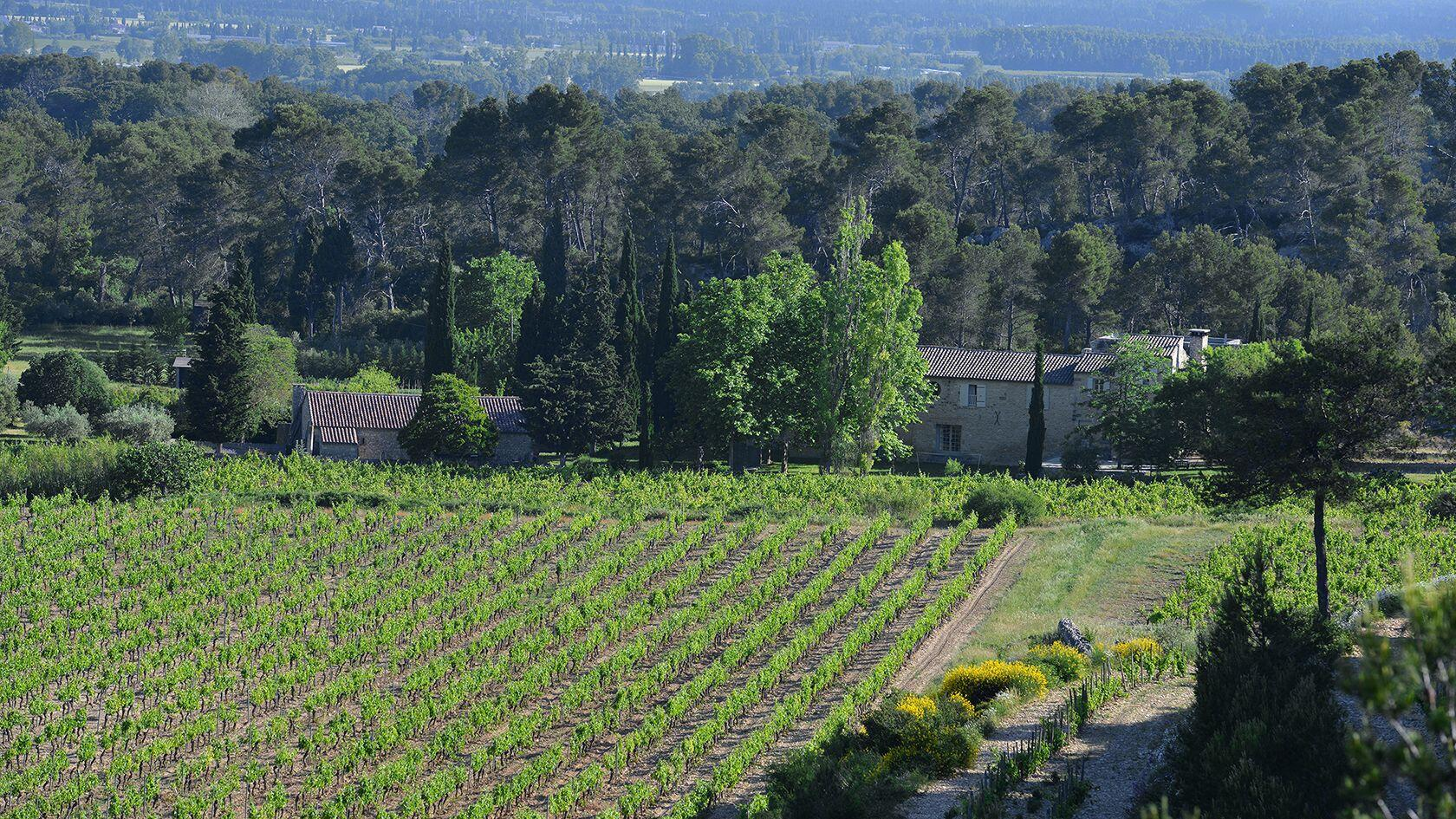 Domaine de Trévallon Vineyard views