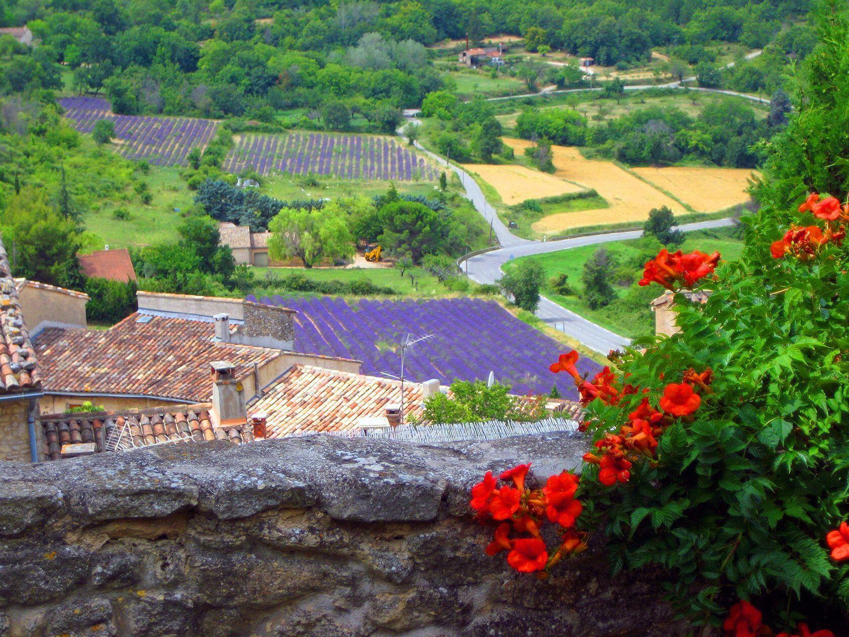 Luberon Views Lavender fields