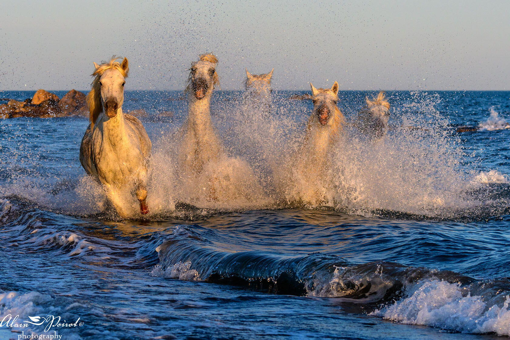 camargue horses Photography Provence Alain Poirot