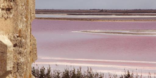 Aigues Mortes Camargue Visit