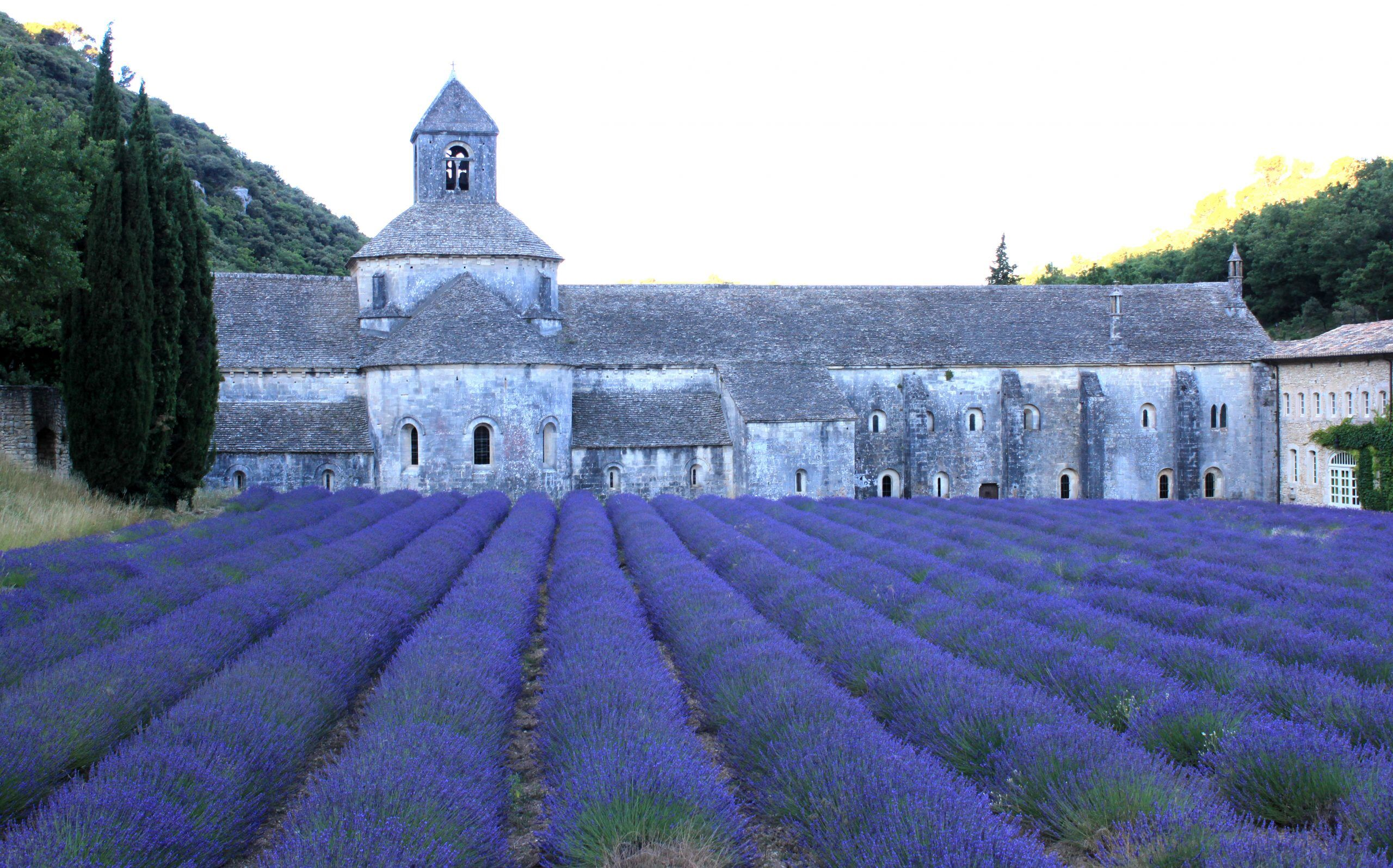 Rent Our Home Provence Lavender at Senanque