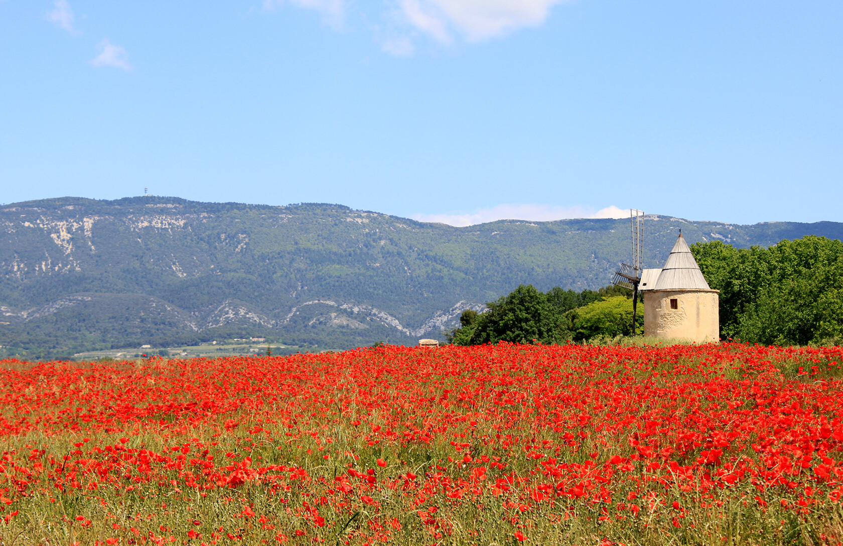 South Luberon poppies in Provence Rent our Home