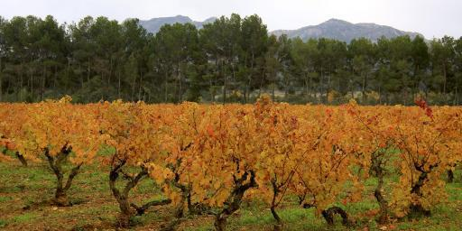 Colours Tastes Autumn Provence Alpilles Vineyards