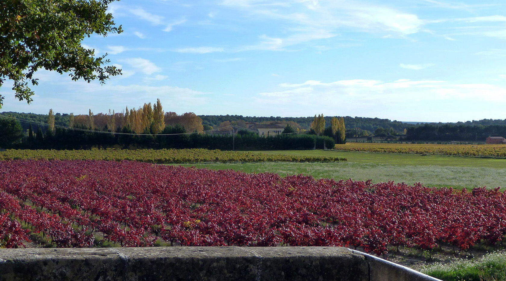 Taste Colours Autumn Provence Magnificent red vines