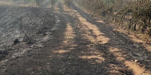 Brush Fire Devastates Vineyards in the Var 2021